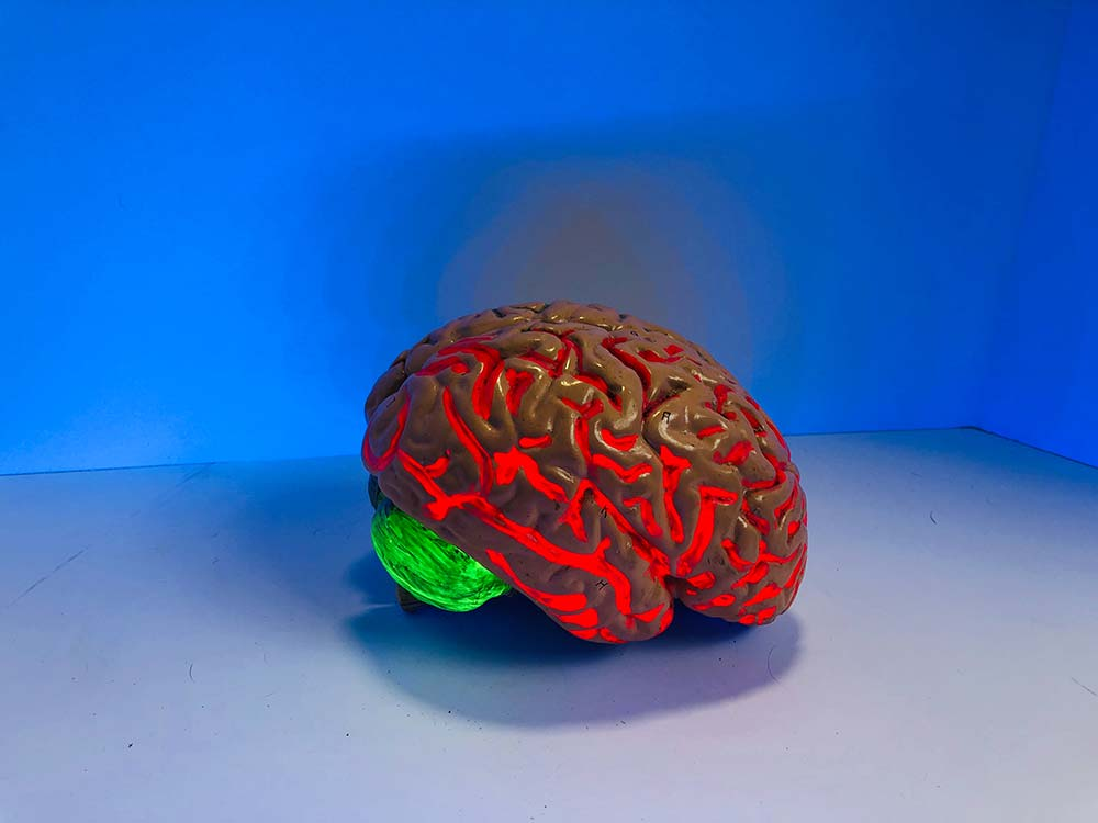 Brain Plasticity and the new consumer